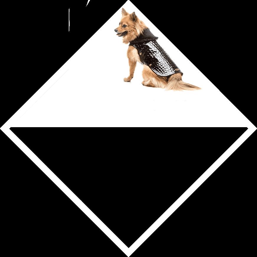 kutyaruha