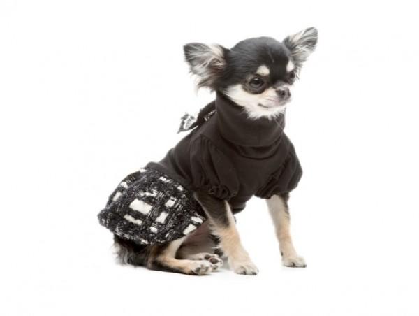 Chanelle Tutu Kutyaruha