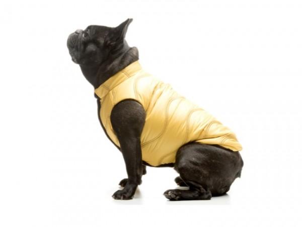 Fonzie Duvet Bulldog Kabát / Mopsz Kabát