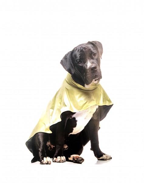 Basic Nagyméretű Kutya Esőkabát